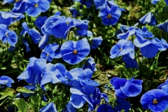 229-blue-flower