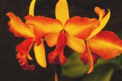 230-flower-2