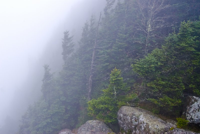 38-in-the-clouds-roan-mountain-tenn