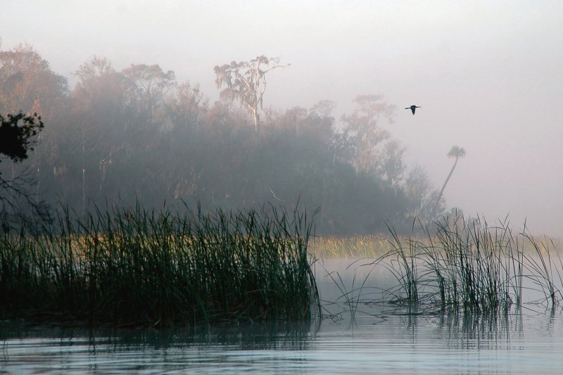 39-lake-tarpon-at-dawn