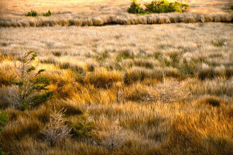 Overlooking-Marshland