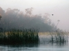 39-lake-tarpon-at-dawn