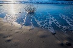 Beach-Coral