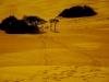 Jockey's Ridge Dunes