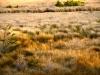 Overlooking Marshland