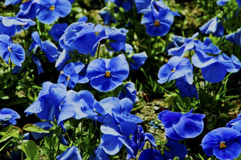 Flora Fine Art